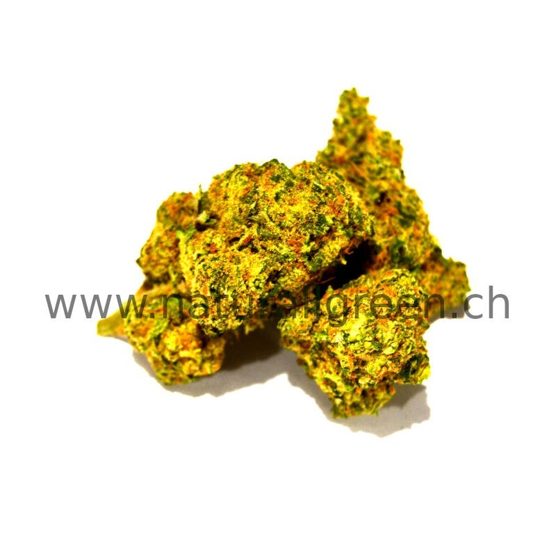 CBD Harlequin Cannabis Indoor