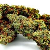 CBD LIMONCELLO Cannabis Indoor