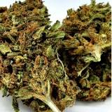 CBD SILENT Cannabis sous-serre